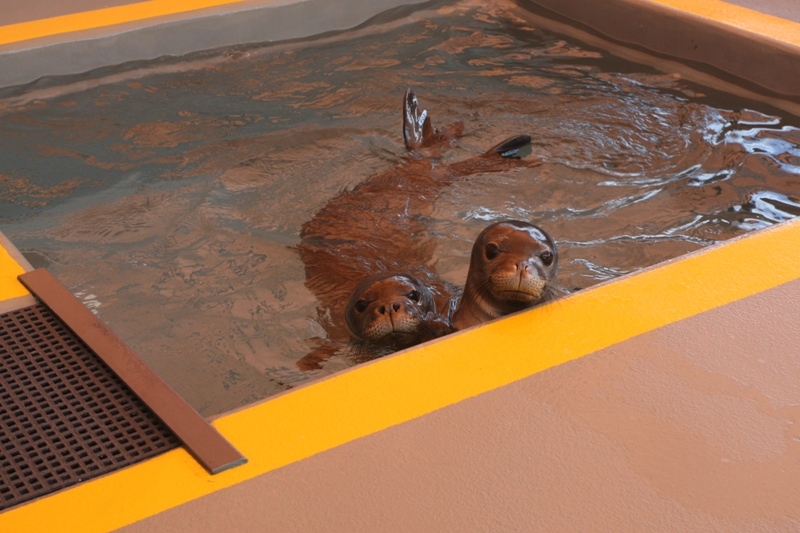 Ke Kai Ola: Saving The Hawaiian Monk Seal