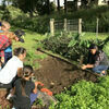 Kohala Elementary Discover Garden